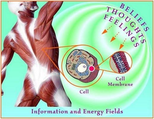 fascia_cells